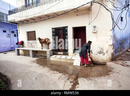 AGRA, Uttar Pradesh, Inde - 24 février, 2015: Indian woman cleaning sa maison avec un balai, qui se tenait à côté de chèvre à ruelle de Taj Ganj district. Banque D'Images