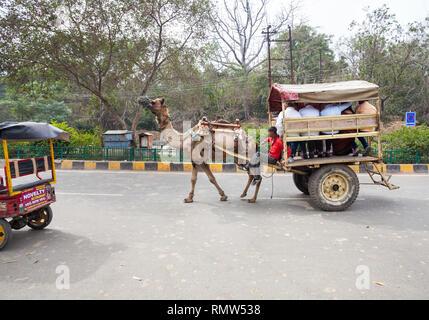 AGRA, Uttar Pradesh, Inde - 24 février, 2015: Taj Mahal est un endroit populaire où les chameaux utilisés comme moyens de transport pour les touristes. Banque D'Images