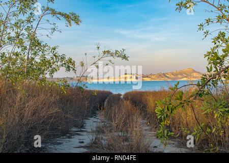 Chemin de terre entourée de végétation menant au lac Banque D'Images