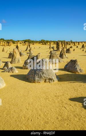 Désert des Pinnacles de parc national de Nambung dans la matinée, l'ouest de l'Australie