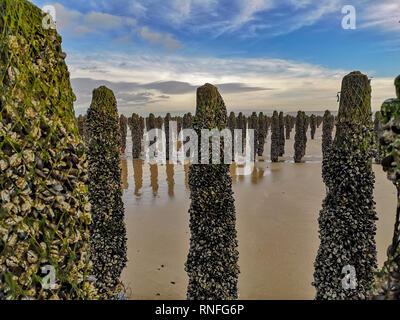 Marée basse l'exposition Lignes de moules cultivées sur robes attachées à des poteaux dans la baie de Wissant au Cap Gris-nez, Pas-de-Calais dans le Nord de la France Banque D'Images
