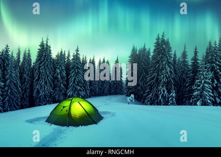 Aurora Borealis. Northern Lights en forêt d'hiver. Ciel avec lumières polaires et des étoiles. Nuit paysage d'hiver avec Aurora, tente verte et de pinède. Concept de voyage Banque D'Images
