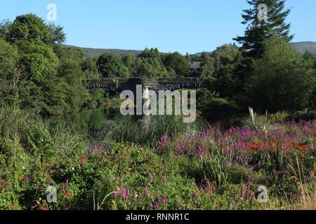 Sélection de couleur des fleurs sauvages sur les bords de la rivière, Kenmore, comté de Kerry, Irlande