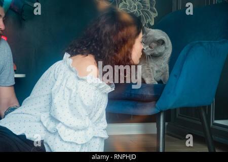 Close-up curly mignon jeune femme en chemise blanche embrassant un British cat sur son nez