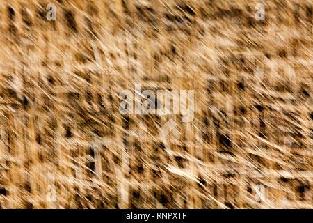 Dans les structures de l'herbe sèche, gros plan, avec un effet d'effacement