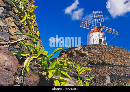 Jardin de cactus, Lanzarote, Canary Islands, Spain, Europe Banque D'Images