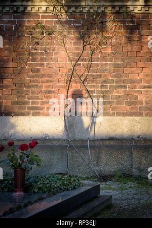 Une ombre de Jésus sur un mur encadré par un rosier Banque D'Images