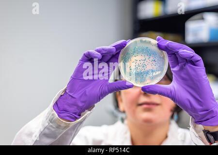 Femme scientifique microbiologiste / l'examen de la plaque de culture bactérienne