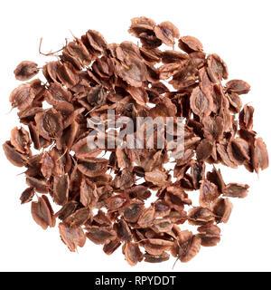 Un tas de semences de qualité de la rhubarbe, pour votre beau jardin. Banque D'Images