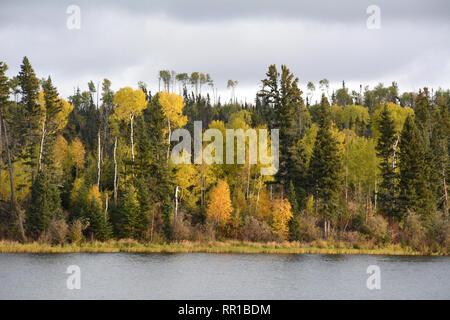 Les couleurs de l'automne de la forêt boréale sur les rives du lac Otter près du village de Missinipe dans le nord de la Saskatchewan, Canada. Banque D'Images