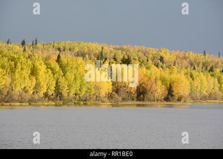 Les couleurs de la forêt jaune vif sur Otter Lake, près du village de Missinipe dans le nord de la Saskatchewan, Canada. Banque D'Images