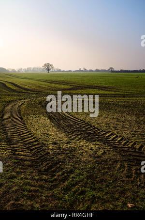 Vue sur le paysage agricole d'avoine et de blé avec empreinte de tracteur sur misty fine matin de printemps sous ciel bleu à Beverley, Yorkshire, UK. Banque D'Images