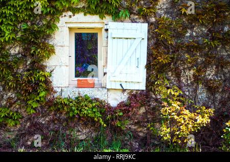 Une fenêtre blanche avec obturateur blanc et vide pot de fleurs sur le mur recouvert de vignes et des lots de feuilles vertes Banque D'Images