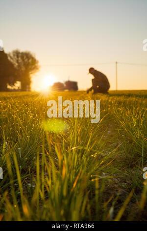 Un agriculteur dans son champ examine ses récoltes au lever du soleil. Banque D'Images