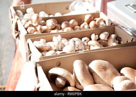 Faire revenir les champignons dans des encadrés à un marché prêt à être acheté Banque D'Images