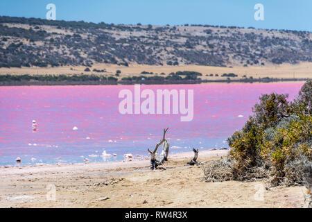 Plage avec dérive du Lac Rose à côté de Gregory à l'ouest de l'Australie Banque D'Images