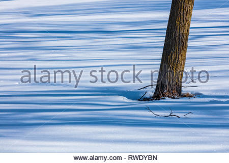 Les ombres des arbres sur la neige en hiver. Banque D'Images