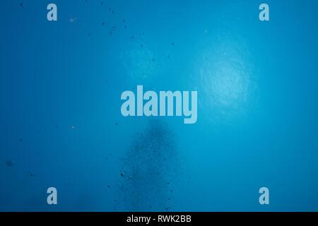Clair cristal pur de bulles de la profondeur de l'océan bleu dans la lumière du soleil à la surface de la base sous-marine Banque D'Images