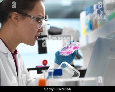 Visualisation scientifique dans les cellules de la plaque et multi prêt pour analyse en laboratoire Banque D'Images
