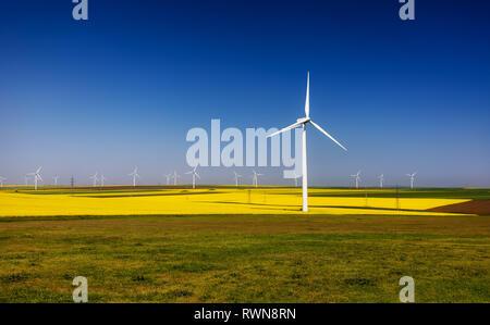 Éoliennes. Les champs avec les moulins à vent. Champ de colza en fleur. L'énergie renouvelable. Protéger l'environnement. Dobrogea, Roumanie Banque D'Images