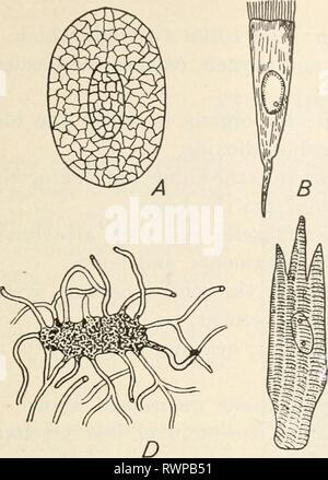 Éléments de biologie; un des éléments pratiques de la biologie; un texte utile-livre de corréler la botanique, la zoologie et la physiologie humaine elementsofbiolog00hunt Année: [c1907] METAZOA 189