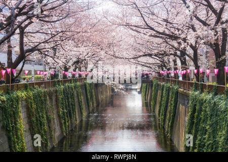 Cherry Blossom canal bordé de Meguro à Tokyo, Japon. Printemps en avril à Tokyo, Japon. Banque D'Images