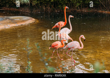 Balades dans l'étang des flamants roses dans le parc zoologique, Barcelone, Espagne