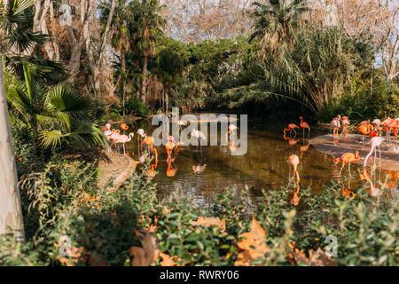 Balades dans l'étang des flamants roses du zoo entouré de plantes luxuriantes, Barcelone, Espagne