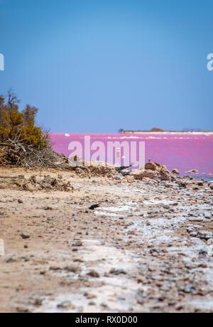 Le bois mort à la plage du lac rose à côté de Gregory à l'ouest de l'Australie Banque D'Images