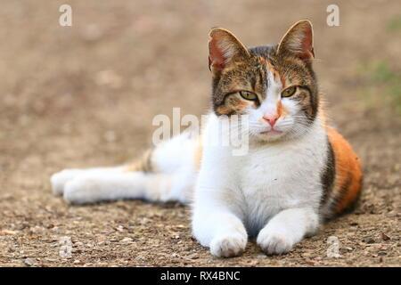 Cute cat posing in backyard