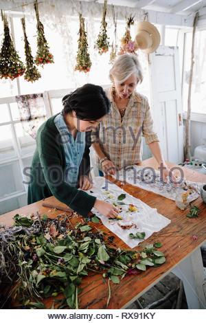 Les femmes fleurs de séchage pour la fabrication du papier Banque D'Images