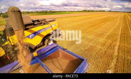 Une récolteuse jaune et un camion chargé de grains. Les grains récoltés par l'ensileuse puis transférés sur le camion pour le chargement Banque D'Images