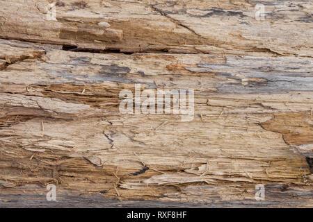 Tronc de l'arbre dépouillé de l'arrière-plan de l'écorce ou de texture. Banque D'Images