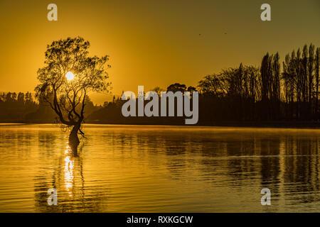 Le célèbre Lonely tree du Lac Wanaka et enneigés pics Buchanan, île du Sud, Nouvelle-Zélande Banque D'Images