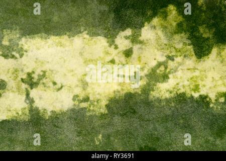 La peau de la pastèque tourné avec le premier objectif macro, taille XXXL Banque D'Images