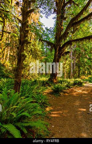 Forêt de l'été les arbres couverts de mousse sur fougères Banque D'Images