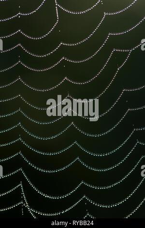Close-up of dewdrops / gouttes de rosée sur la toile d'araignée / Banque D'Images