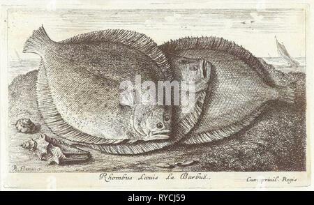 Trois poissons sur la plage, barbue, Scophthalmus rhombus, une espèce de poisson plat dans la famille turbot Banque D'Images
