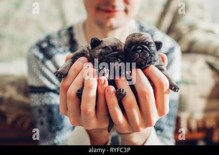 Jeune homme tenant le pug dog chiots en mains. Chiots peu dormir. Élevage de chiens maître