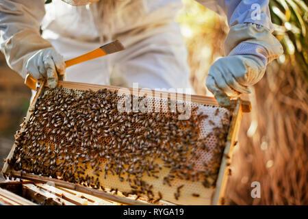 L'apiculteur à la recherche dans un grand groupe des abeilles sur une ruche. Banque D'Images