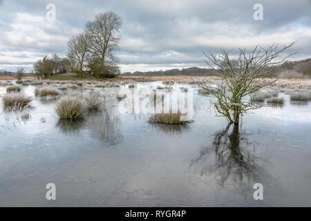 Les arbres dans les eaux gelées, Silverdale Moss Banque D'Images