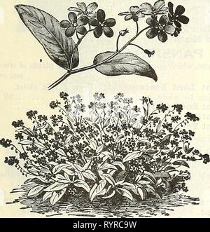 Dreer est milieu de l'été 1928 (1928) Liste de Dreer Le milieu de l'été 1928 . dreersmidsummerl liste1928henr Année: 1928 Pentstemon Gloxinioides Sensation par pkt. 3236 Dissitiflora. De nain, port compact, avec des gerbes de fleurs bleu exquis, grande, particulièrement adapté pour la plantation de bulbes à floraison printanière entre 3238 $ Palustris Semperflorens. Un everblooming variété, à commencer à fleurir en mai et continue jusqu'à l'automne. Grandes fleurs bleu clair, assez en sprays. 2 pkts., 25 cts 1515 Lythrum (troubles civils) 3071 Roseum Superbum. Une très jolie plante vivace; de plus en plus de 3 pieds de haut, et produit des épis Banque D'Images
