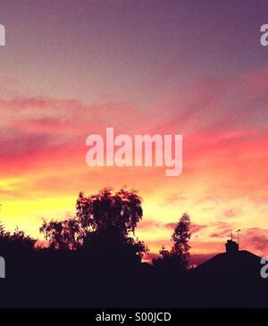 La silhouette des arbres contre le ciel orange Banque D'Images