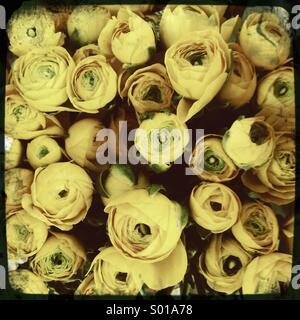 Bouquet de roses jaunes Banque D'Images