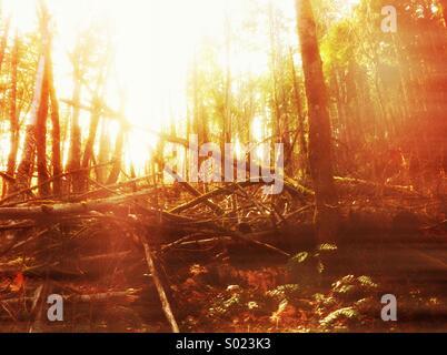 Scène lumineuse en forêt au coucher du soleil Banque D'Images