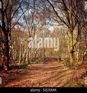 Une promenade dans les bois... Banque D'Images