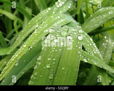 De l'herbe après la pluie Banque D'Images