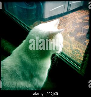 Cat looking out window Banque D'Images
