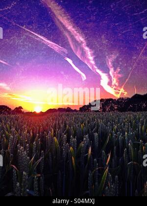 Coucher de soleil sur champ de blé Banque D'Images