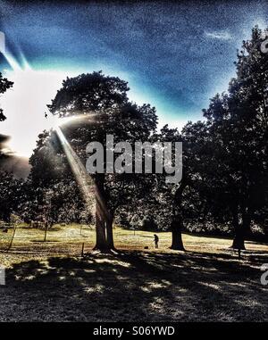 Femme et son chien entre les arbres dans un parc avec des rayons de soleils à travers des arbres Banque D'Images